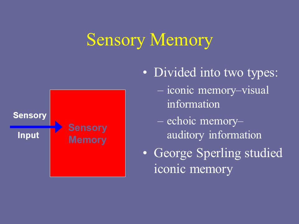 Echoic Memory And How It Works | Betterhelp |Sensory Memory Examples Psychology