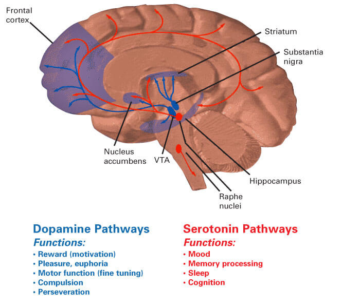 How To Increase Dopamine Food Supplements And Medications