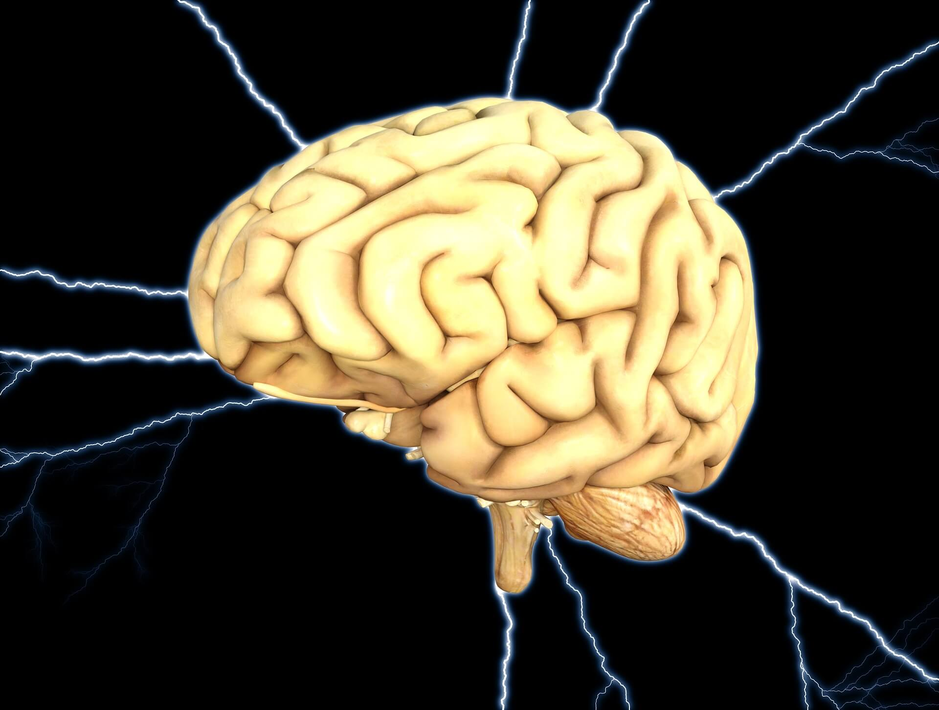 Mirror neurons of the brain: definition, function, influence on the formation of human personality 48