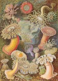 margaret floy washburn contributions to psychology