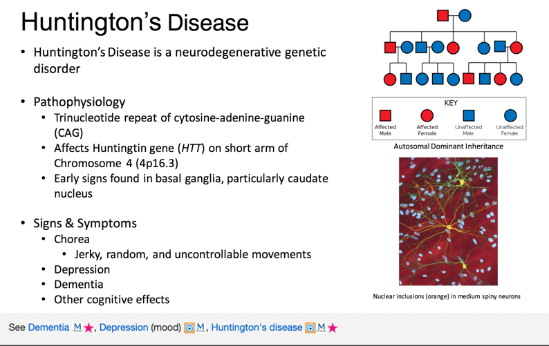 direct path huntingtons disease - 794×501