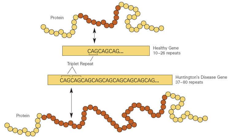 What Is The Huntingtons Disease Treatment Betterhelp