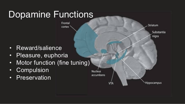 What Is Dopamine And How Does It Affect The Brain And The Body